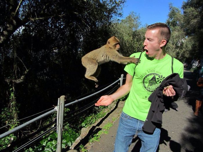 Monkey Photobomb