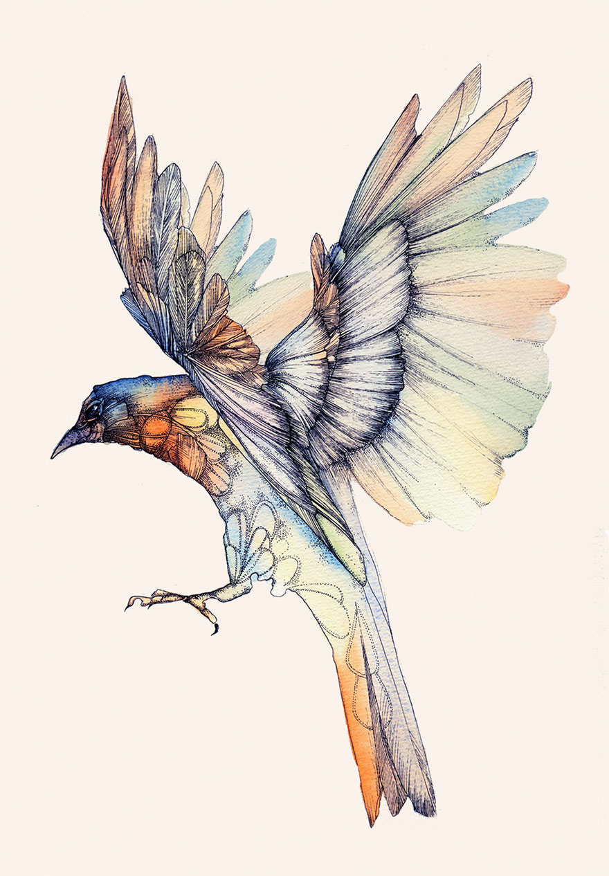 ink-watercolor-paintings-birds-juli-jah