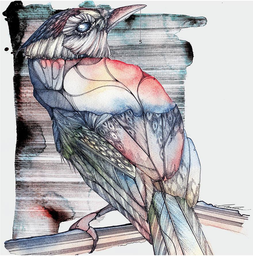 ink-watercolor-paintings-birds-juli-jah3