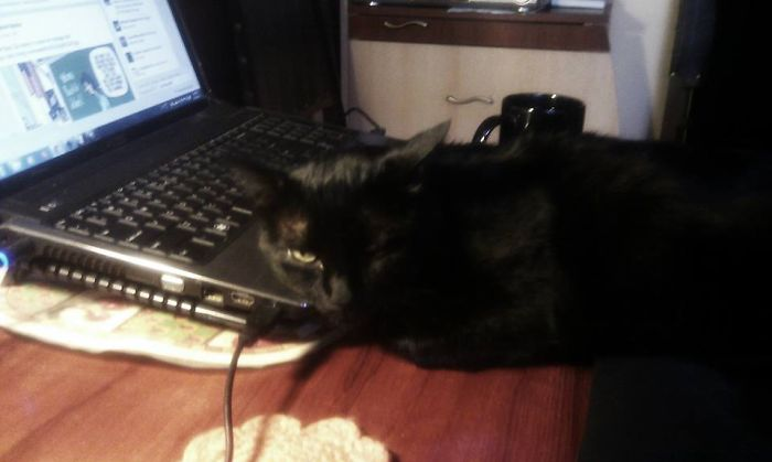 Taking Care Of The Laptop