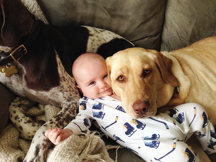 Dog Cuddling A Baby