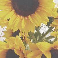 electricsunflowers
