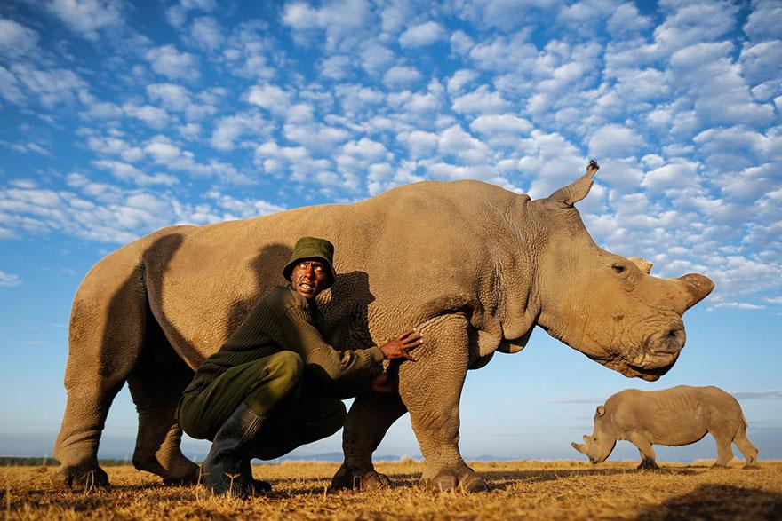 last-northern-white-rhinoceros-conservation-rangers-kenya-2
