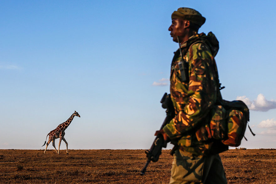 last-northern-white-rhinoceros-conservation-rangers-kenya-4