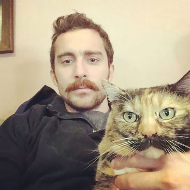 Like Owner Like Cat