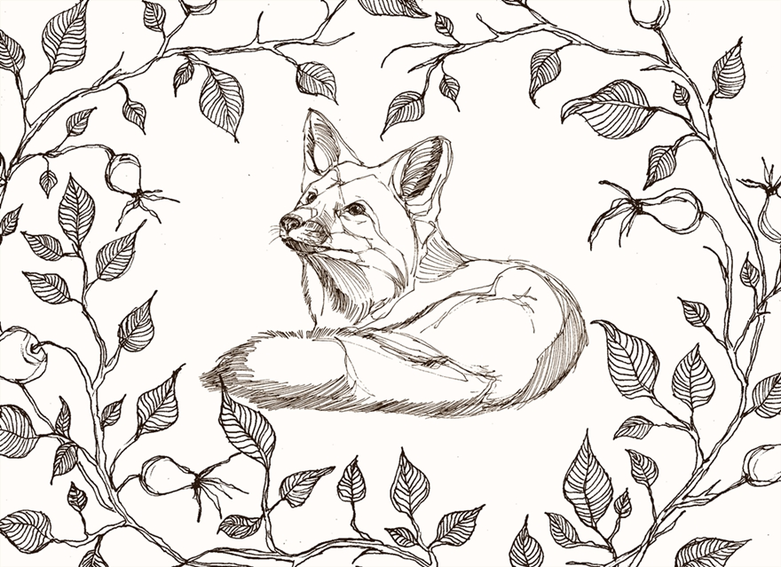 Line Art Animals : My line art animals with a touch of fantasy bored panda
