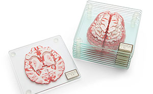 Stackable Brain Specimen Coasters That Form A 3D Brain On Your Table
