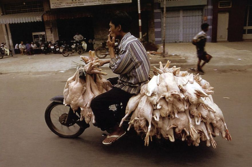 Man Transporting Birds