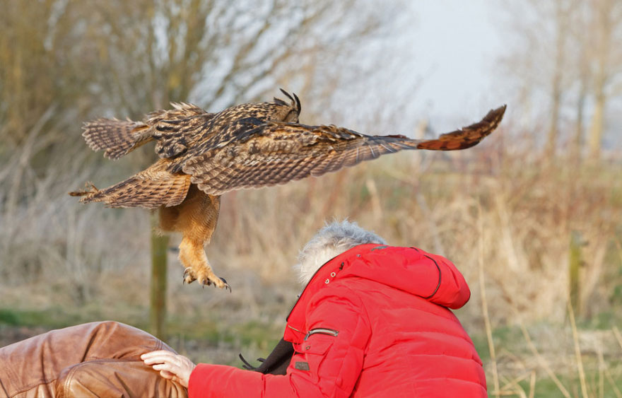 owl-lands-on-head-netherlands-noordeinde-3