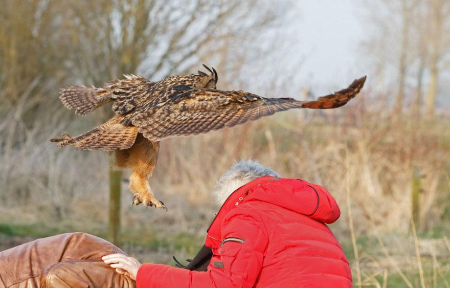 owl-lands-on-head-netherlands-noordeinde-3