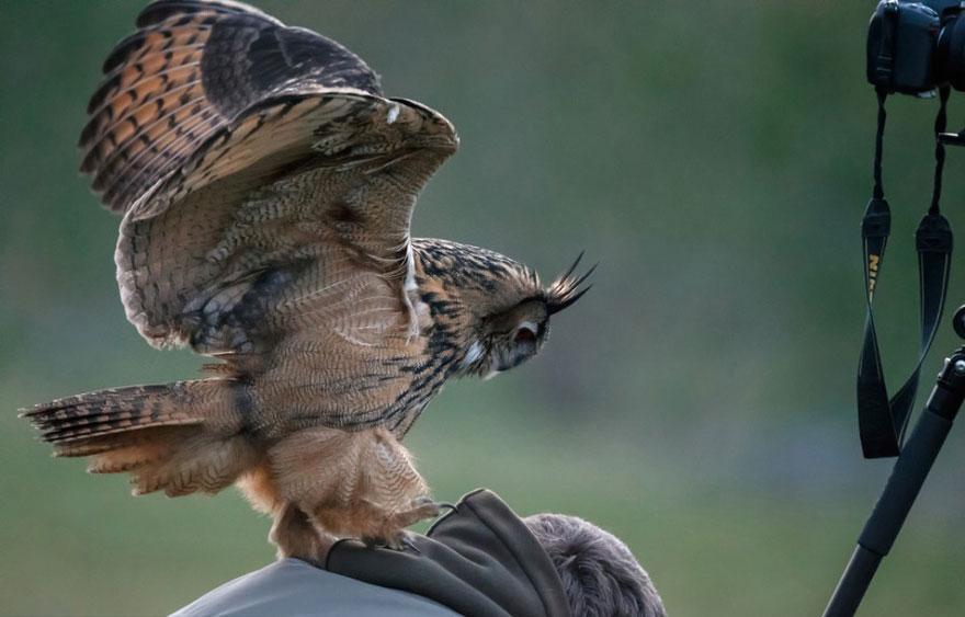 owl-lands-on-head-netherlands-noordeinde-6