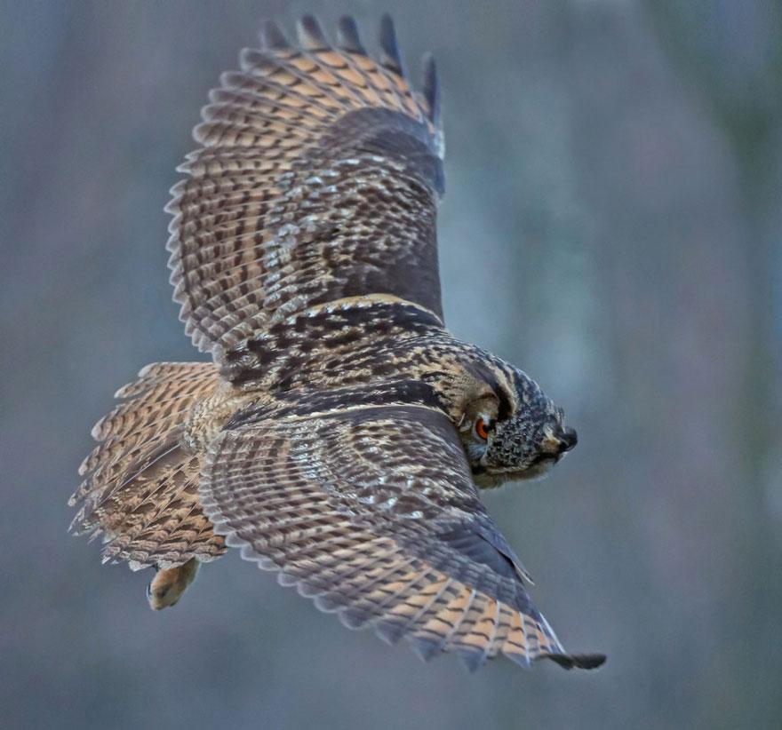 owl-lands-on-head-netherlands-noordeinde-8