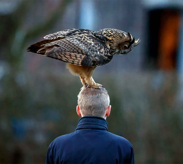 Meet The Dutch Owl Who Loves To Land On People's Heads