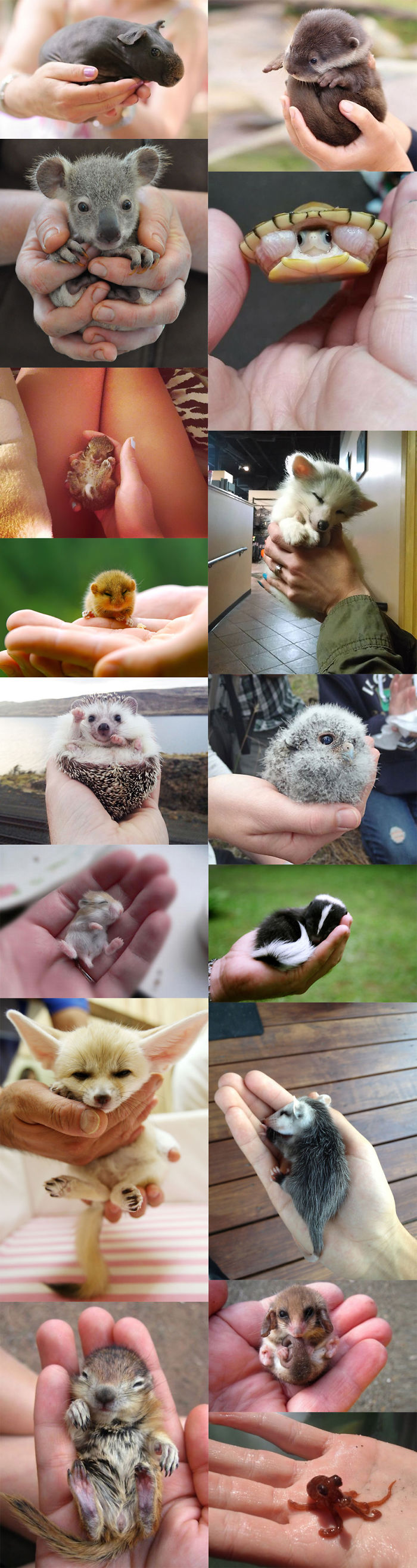 Cute Baby Animals Palms Hands