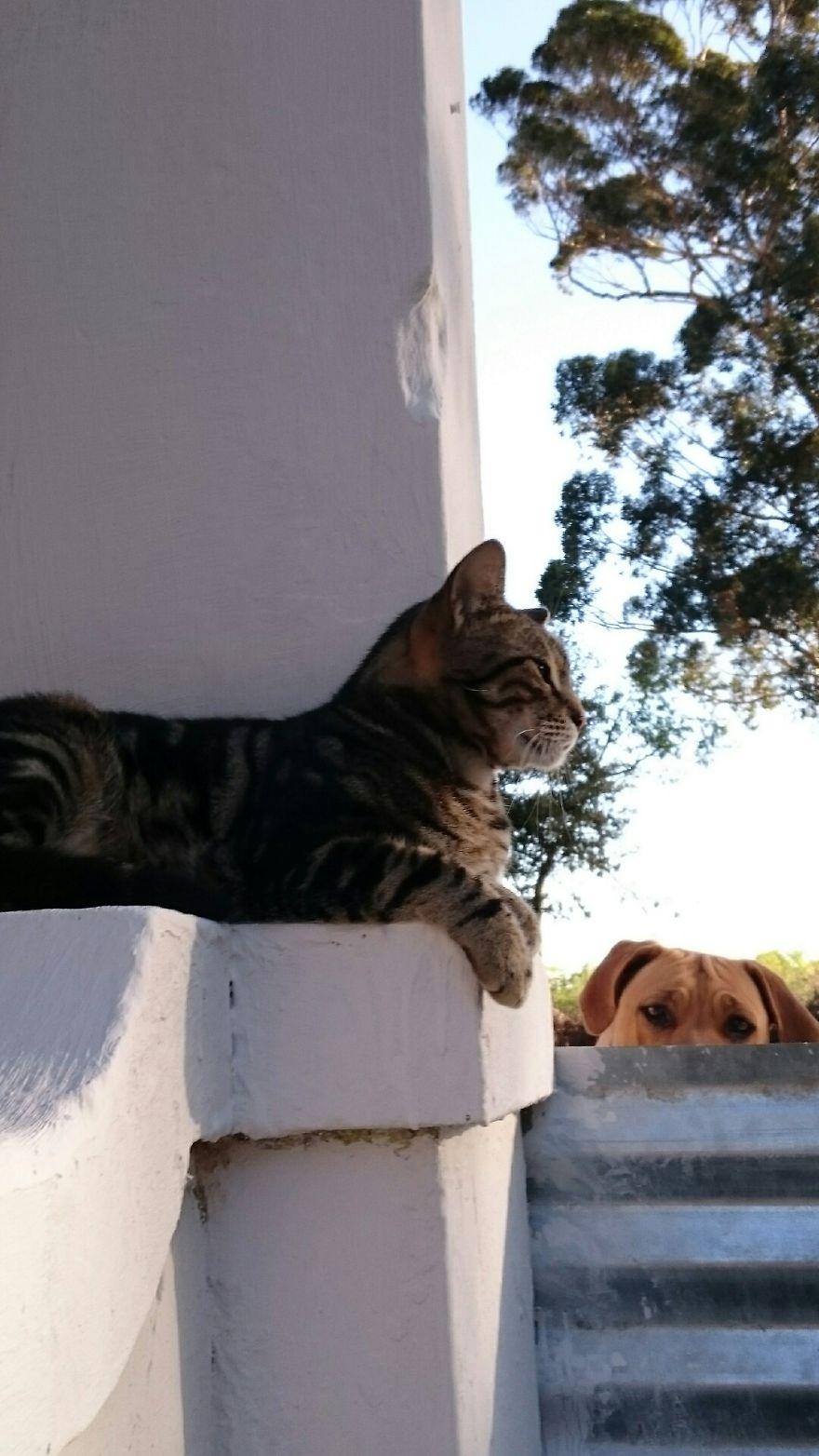 Dog Photo Bombing Cat
