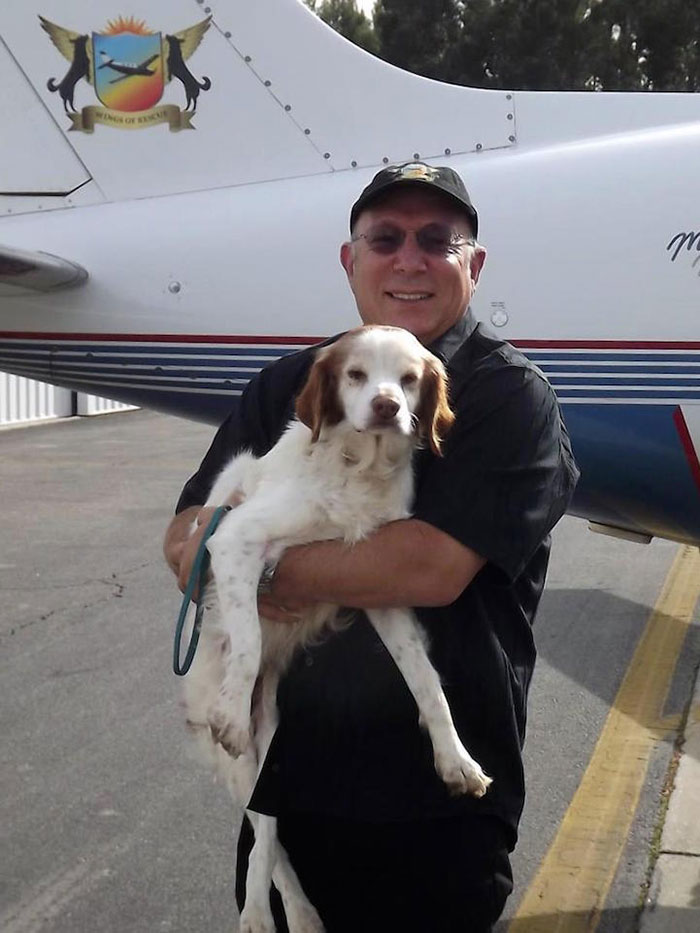 shelter-dog-airplane-transport-wings-of-rescue-yehuda-netanel-9