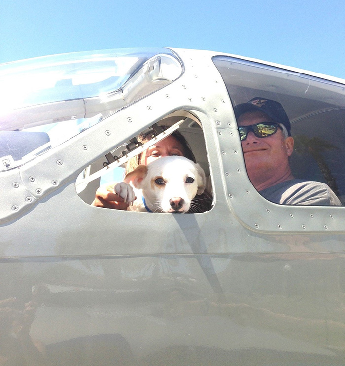 Volunteer Pilots Fly Shelter Dogs To New Homes To Save Them From Euthanasia