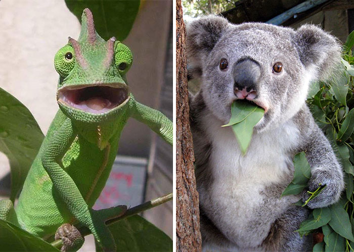 91 Astonished Animals Who Are Freaked Out By What's Happening