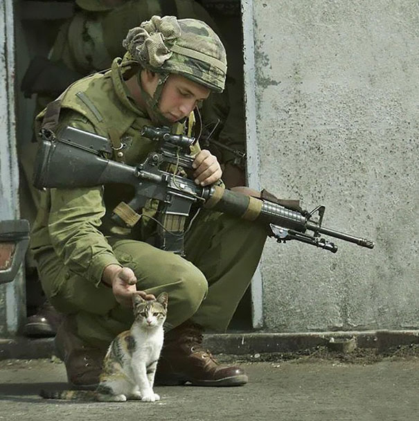 Soldier Petting A Cat