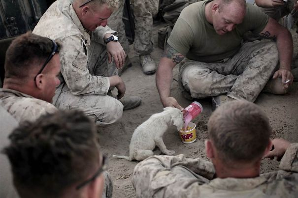 Marines Give Breakfast To Stray Puppy