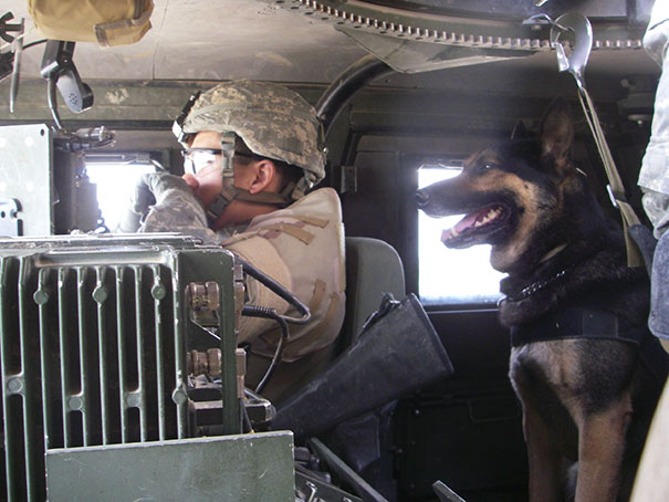 Military Working Dog