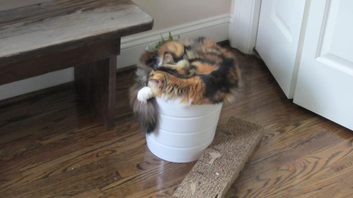We Planted A Kitten…