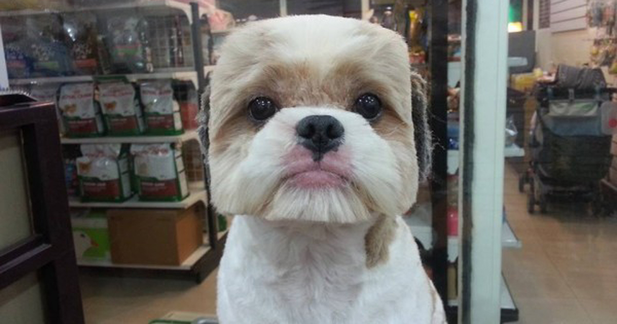 Taiwanese Give Dogs Perfectly Square Or Round Haircuts In Latest