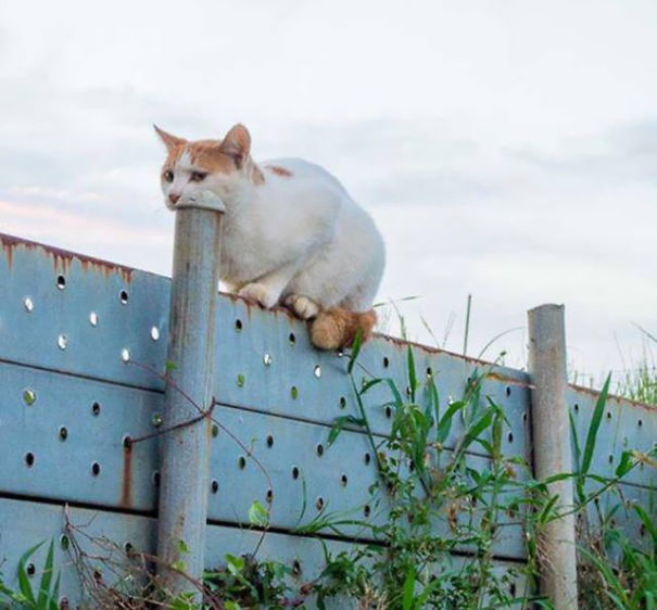 This Cat Is Eating This Pole