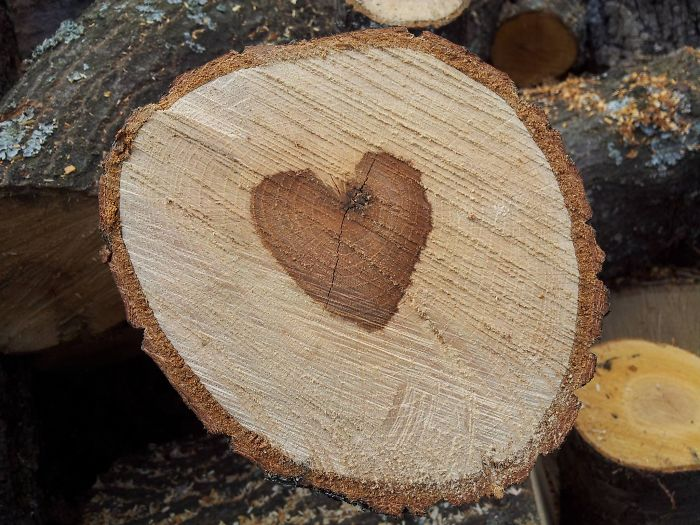 Who Says The Trees Have No Heart?