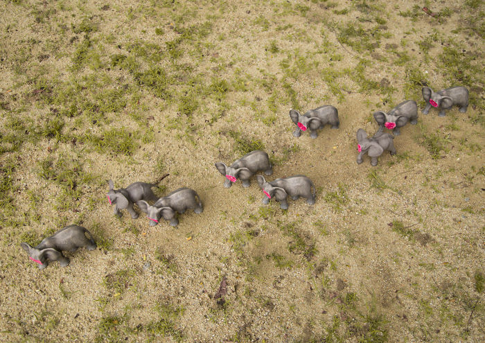 Untusked – An Art Project To Save Elephants