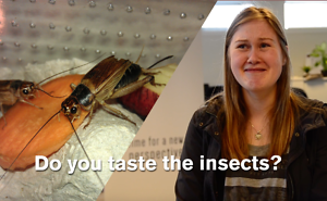 People Taste Insect Infused Protein Bars Without Knowing What It Is!