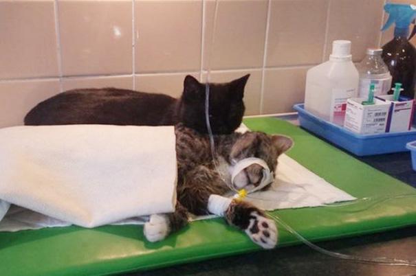 veterinário-enfermeira-gato-abraços-abrigo animais-radamenes-bydgoszcz-poland-10
