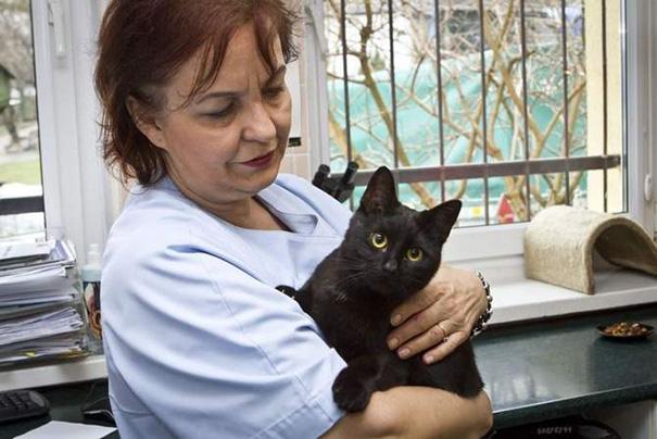 veterinário-enfermeira-gato-abraços-abrigo animais-radamenes-bydgoszcz-poland-2