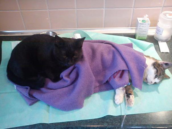 veterinário-enfermeira-gato-abraços-abrigo animais-radamenes-bydgoszcz-poland-3