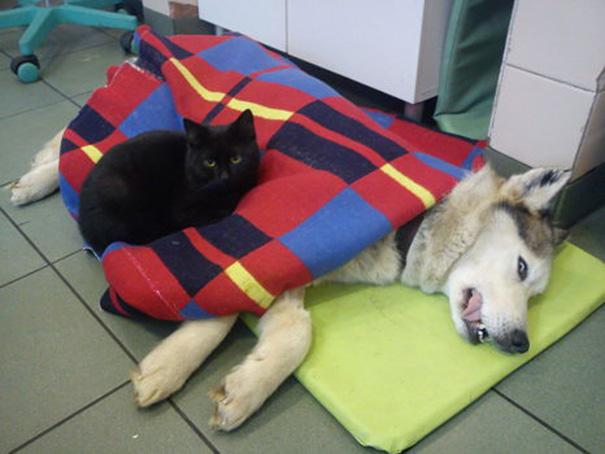 veterinário-enfermeira-gato-abraços-abrigo animais-radamenes-bydgoszcz-poland-4