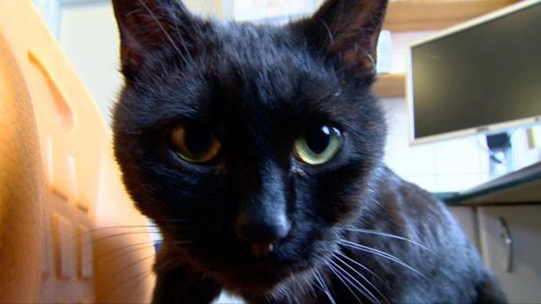 veterinário-enfermeira-gato-abraços-abrigo animais-radamenes-bydgoszcz-poland-5