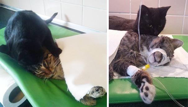 veterinário-enfermeira-gato-abraços-abrigo animais-radamenes-bydgoszcz-poland-6