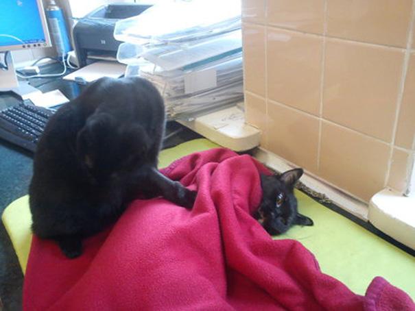 ветеринарно-сестра-кошка-обнимает-приют-животные-radamenes-быдгощ-Польша-7