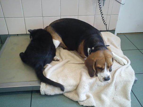 veterinário-enfermeira-gato-abraços-abrigo animais-radamenes-bydgoszcz-poland-8