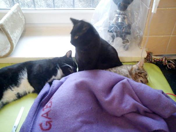 ветеринарно-сестра-кошка-обнимает-приют-животные-radamenes-быдгощ-Польша-9