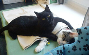 Incredible Nurse Cat From Poland Looks After Other Animals At Animal Shelter