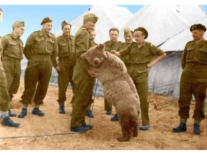 Meet Wojtek, The One And Only Bear Private During WWII