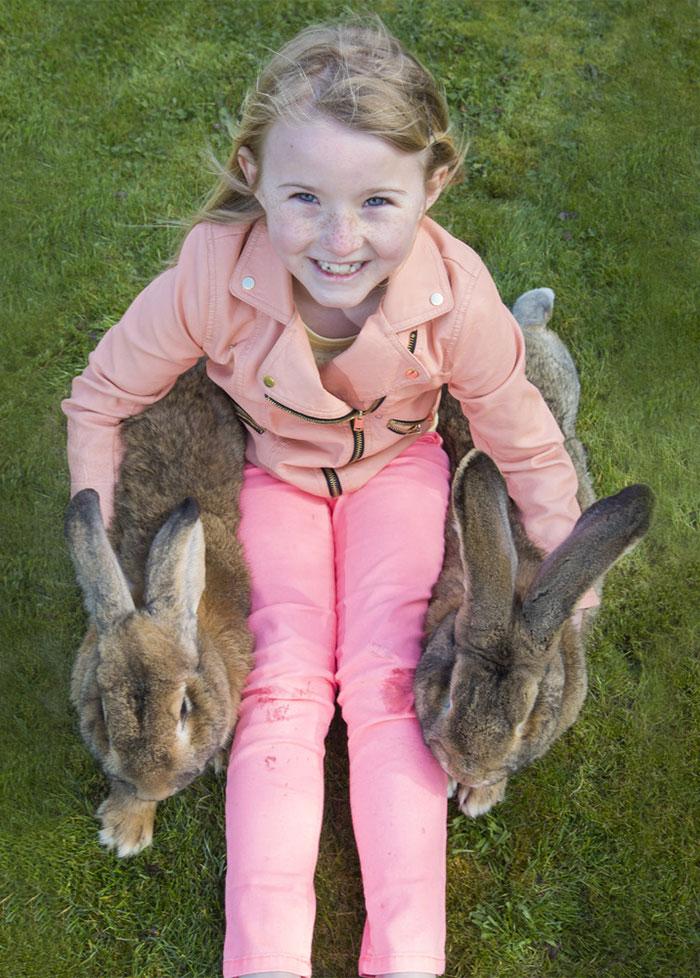 worlds-largest-rabbit-darius-jeff-5
