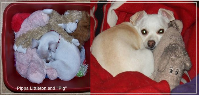 "Pippa Littleton And ""pig"" - 4 Years Apart."