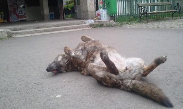 Homeless Dog Waiting For Love