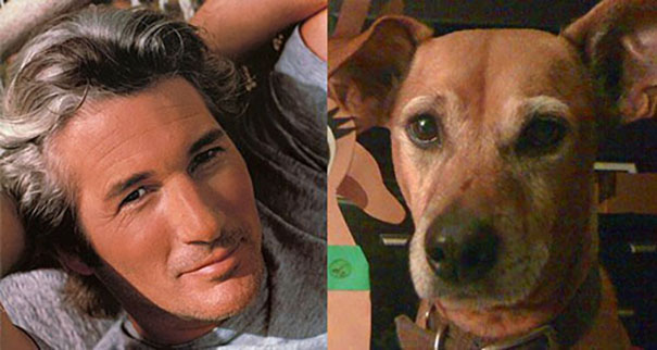 I Thought I Was The Only One To Notice My Dog Looked Like Richard Gere.
