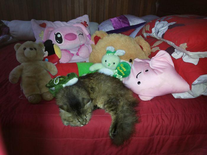 Tribute For Kitty, My Lovely Sister 6/2002-8/2014 :')