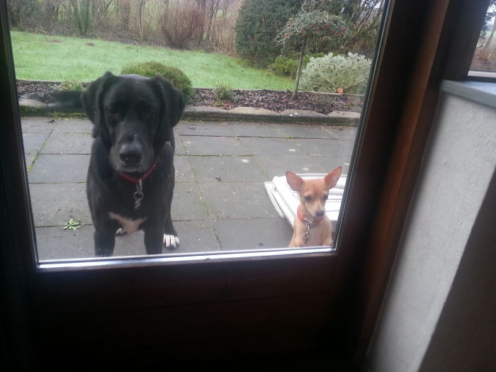 Please Let Us In!