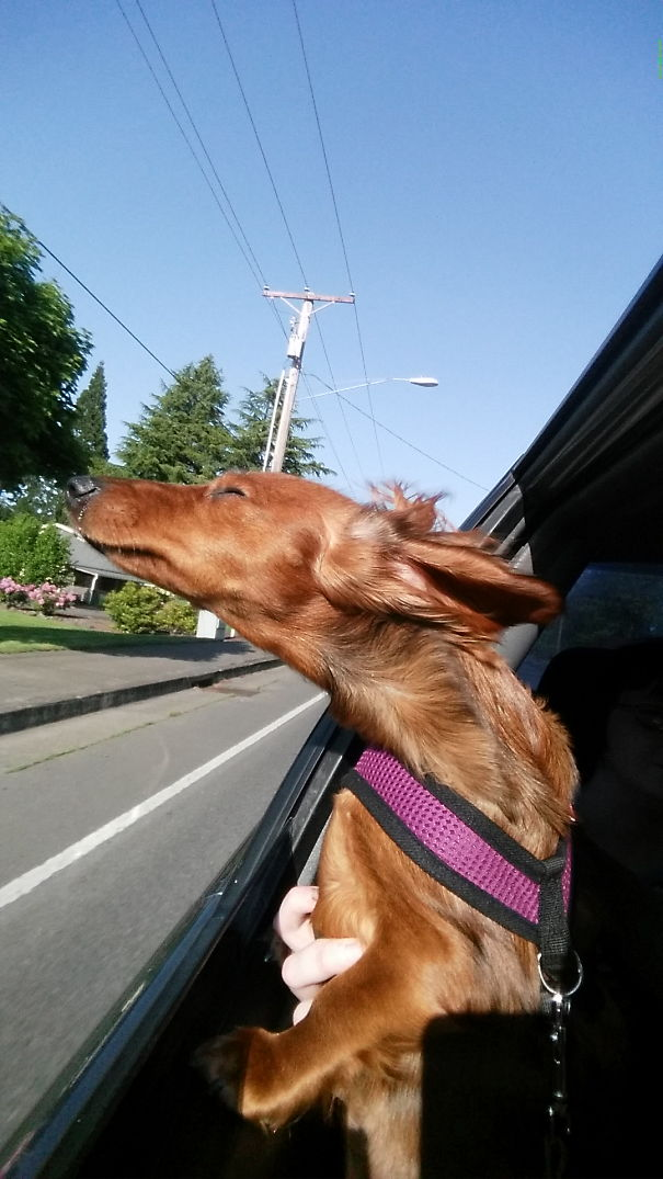 Cleo Loves The Wind In Her Ears!
