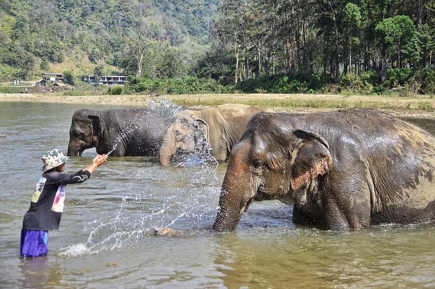 An Elephant's World
